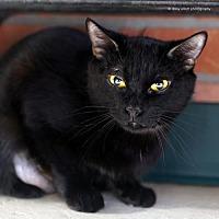 Adopt A Pet :: Vivani - Tucson, AZ