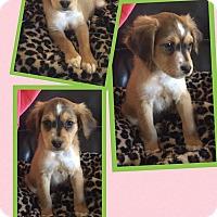 Adopt A Pet :: Laverne - Scottsdale, AZ