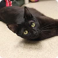 Adopt A Pet :: Rebecca - Naperville, IL