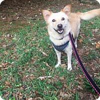 Adopt A Pet :: Layla Krueger - Santa Fe, TX