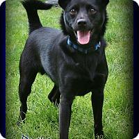 Adopt A Pet :: Danke - Shippenville, PA