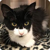 Adopt A Pet :: Dottie - Sacramento, CA