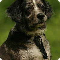 Adopt A Pet :: Jasper - Florence, KY