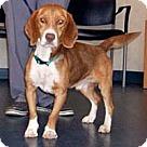 Adopt A Pet :: Redmond