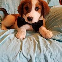 Adopt A Pet :: Acar (has been adopted) - Trenton, NJ