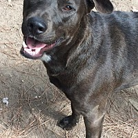 Adopt A Pet :: Polman - Sunbury, OH