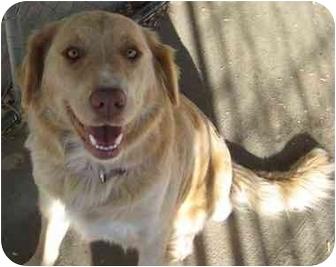 Golden Retriever Mix Dog for adoption in Columbus, Nebraska - Missy