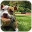 Photo 3 - American Pit Bull Terrier Mix Puppy for adoption in Framingham, Massachusetts - Charlee
