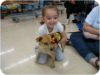Chihuahua/Terrier (Unknown Type, Small) Mix Dog for adoption in Homestead, Florida - Benito aka Benny