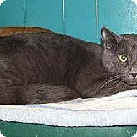 Adopt A Pet :: Hans - Dover, OH