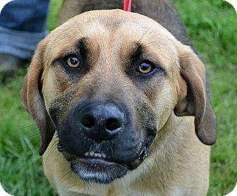 Hound (Unknown Type)/Shepherd (Unknown Type) Mix Dog for adoption in Searcy, Arkansas - Logan