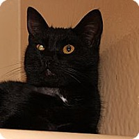 Adopt A Pet :: Clarice - Santa Monica, CA