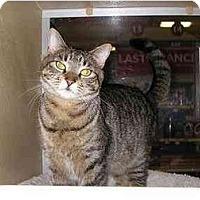 Adopt A Pet :: Ms. Kitty - Woodstock, GA