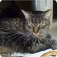Adopt A Pet :: Gomez - Hamburg, NY