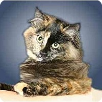 Adopt A Pet :: Tori - Montgomery, IL