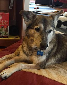 Shepherd (Unknown Type) Mix Dog for adoption in South Bend, Indiana - Millie
