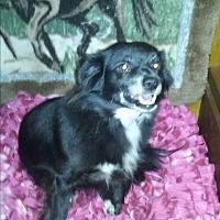 Adopt A Pet :: Georgia - Crawfordville, FL