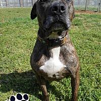 Adopt A Pet :: Dee - Huntsville, AL