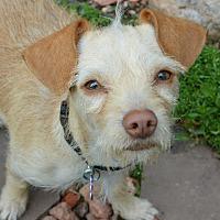 Adopt A Pet :: Woody - Denver, CO