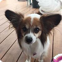 Adopt A Pet :: Gustavo - Topeka, KS