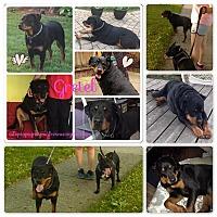 Adopt A Pet :: Gretel - Laingsburg, MI
