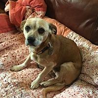 Adopt A Pet :: Jack - Huntsville, AL