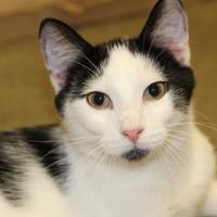 Adopt A Pet :: Rafe - Quincy, IL