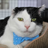 Adopt A Pet :: Dominic - Warwick, RI