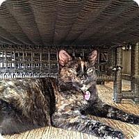 Adopt A Pet :: Esme - Monroe, NC