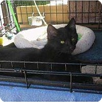 Adopt A Pet :: Naomi - lake elsinore, CA