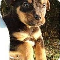 Adopt A Pet :: Patches - Plainfield, CT