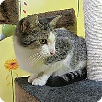 Adopt A Pet :: Emerald - Mobile, AL