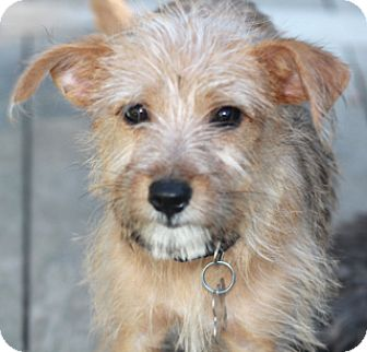 Terrier (Unknown Type, Small) Mix Dog for adoption in Allentown, Pennsylvania - Bindy