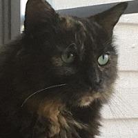 Adopt A Pet :: Cali - Bear, DE