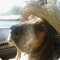 Adopt A Pet :: Cliff - Columbia, SC