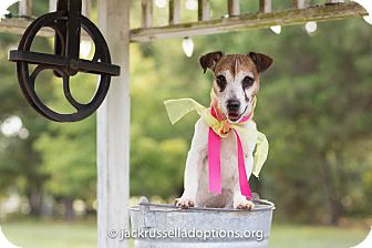 Jack Russell Terrier Dog for adoption in Conyers, Georgia - Sadie