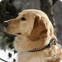 Adopt A Pet :: *Oakley - PENDING - Westport, CT