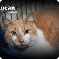 Domestic Shorthair Cat for adoption in Glen Mills, Pennsylvania - Duncan