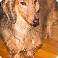 Adopt A Pet :: Eddie - Georgetown, KY