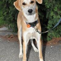 Adopt A Pet :: Sam - Calgary, AB