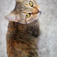 Adopt A Pet :: Aubrey - Baton Rouge, LA
