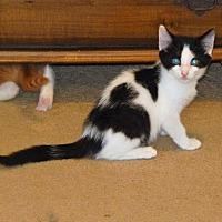 Adopt A Pet :: Siggi (7328) - Tampa, FL