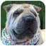 Photo 2 - Shar Pei Dog for adoption in Barnegat Light, New Jersey - Liza