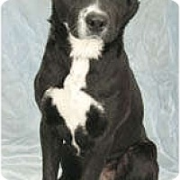 Adopt A Pet :: Oreo - Chicago, IL