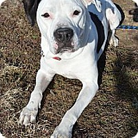 Adopt A Pet :: Liam - Aurora, CO