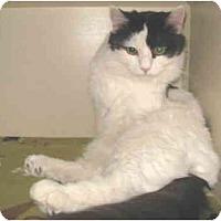 Adopt A Pet :: Pepe - Mesa, AZ