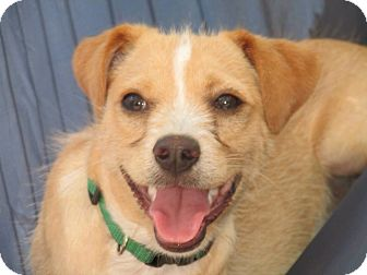 Terrier (Unknown Type, Small) Mix Dog for adoption in Dublin, California - Mikey