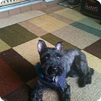 Adopt A Pet :: Tasha - Crystal River, FL