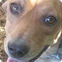 Adopt A Pet :: Benson - Portland, ME