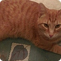 Adopt A Pet :: Mydge - North Highlands, CA